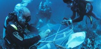 Exploration de la biodiversité marine
